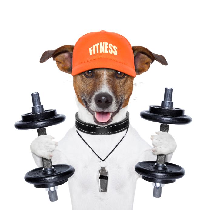 Fit Terrier