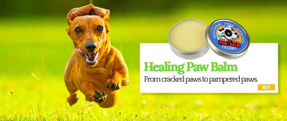Healing Paw Palm